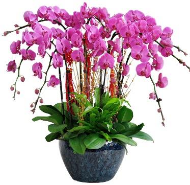 9 dallı mor orkide  Tekirdağ hediye sevgilime hediye çiçek