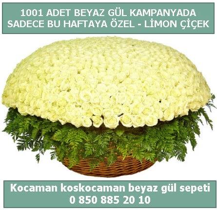 1001 adet beyaz gül sepeti özel kampanyada  Tekirdağ çiçek gönderme