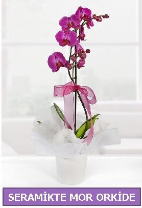 Seramik içerisinde birinci kalite tek dallı mor orkide  Tekirdağ çiçek yolla