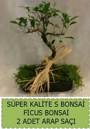Ficus S Bonsai ve arap saçı  Tekirdağ çiçek , çiçekçi , çiçekçilik
