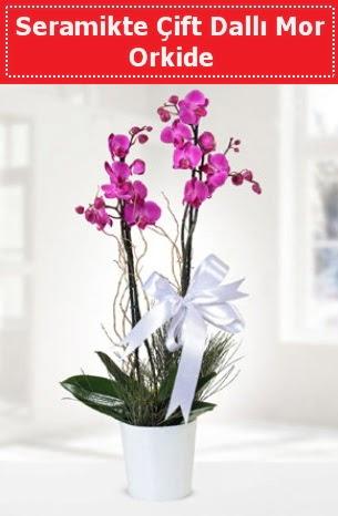 Seramikte Çift Dallı Mor Orkide  Tekirdağ çiçek online çiçek siparişi