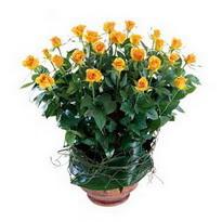 Tekirdağ 14 şubat sevgililer günü çiçek  10 adet sari gül tanzim cam yada mika vazoda çiçek