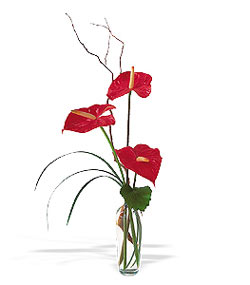 Tekirdağ çiçekçiler  cam yada mika Vazoda 3 adet  antoryum