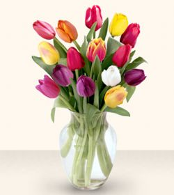 Tekirdağ çiçek siparişi vermek  13 adet cam yada mika vazoda laleler