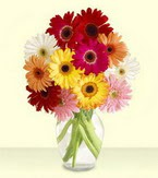 Tekirdağ çiçek gönderme sitemiz güvenlidir  cam yada mika vazoda 15 özel gerbera