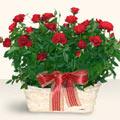 Tekirdağ çiçek yolla  11 adet kirmizi gül sepette