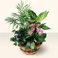 Tekirdağ ucuz çiçek gönder  5 adet canli çiçek sepette