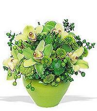 cam yada mika vazoda 5 adet orkide   Tekirdağ İnternetten çiçek siparişi