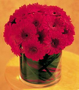 Tekirdağ çiçekçi mağazası  23 adet gerbera çiçegi sade ve sik cam içerisinde