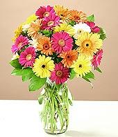 Tekirdağ çiçek mağazası , çiçekçi adresleri  17 adet karisik gerbera
