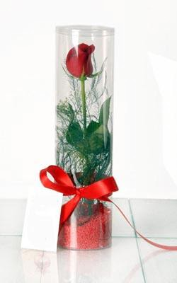 Tekirdağ çiçekçi telefonları  Silindir vazoda tek kirmizi gül