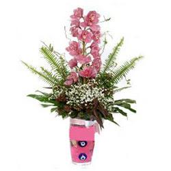 Tekirdağ çiçek siparişi sitesi  cam yada mika vazo içerisinde tek dal orkide çiçegi