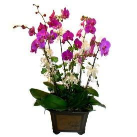 Tekirdağ uluslararası çiçek gönderme  4 adet orkide çiçegi