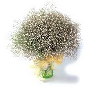 Tekirdağ güvenli kaliteli hızlı çiçek  cam yada mika vazo içerisinde cipsofilya demeti