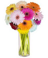 Tekirdağ online çiçek gönderme sipariş  Farkli renklerde 15 adet gerbera çiçegi