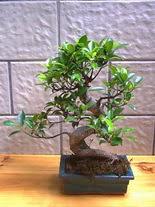 ithal bonsai saksi çiçegi  Tekirdağ çiçek servisi , çiçekçi adresleri