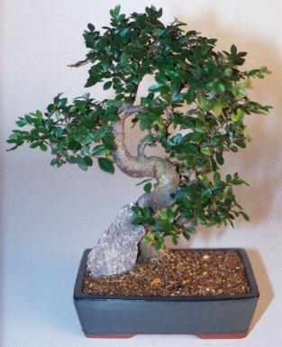 Tekirdağ çiçek gönderme  ithal bonsai saksi çiçegi  Tekirdağ çiçekçiler