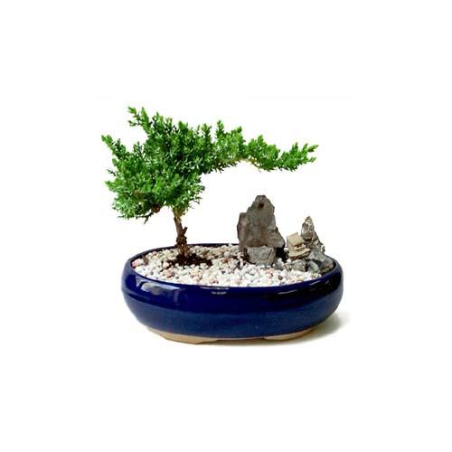 ithal bonsai saksi çiçegi  Tekirdağ çiçek satışı