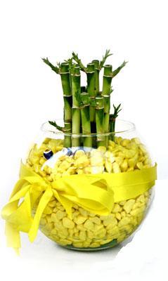cam fanus içerisinde bambo  Tekirdağ internetten çiçek siparişi