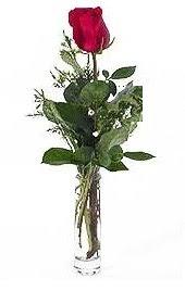 Vazo içerisinde 1 adet kirmizi gül  Tekirdağ 14 şubat sevgililer günü çiçek