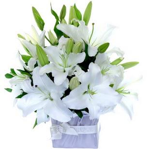 Tekirdağ çiçekçi telefonları  2 dal cazablanca vazo çiçeği