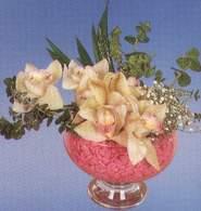 Tekirdağ güvenli kaliteli hızlı çiçek  Dal orkide kalite bir hediye