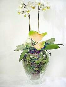 Tekirdağ ucuz çiçek gönder  Cam yada mika vazoda özel orkideler