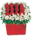 Tekirdağ çiçek satışı  Kare cam yada mika içinde kirmizi güller - anneler günü seçimi özel çiçek