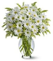 Vazo içerisinde beyaz krizantem çiçekleri  Tekirdağ internetten çiçek satışı