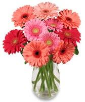 vazo içerisinde 13 adet gerbera çiçeği  Tekirdağ çiçekçiler