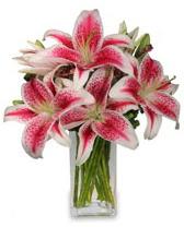 Vazo içerisinde 5 dal kazablanka çiçeği  Tekirdağ 14 şubat sevgililer günü çiçek