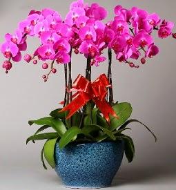 7 dallı mor orkide  Tekirdağ çiçek mağazası , çiçekçi adresleri