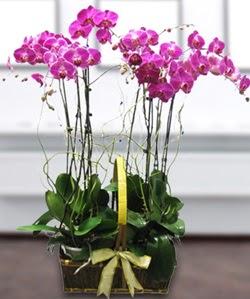 4 dallı mor orkide  Tekirdağ online çiçekçi , çiçek siparişi