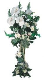 Tekirdağ güvenli kaliteli hızlı çiçek  antoryumlarin büyüsü özel