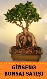 Ginseng bonsai satışı japon ağacı  Tekirdağ uluslararası çiçek gönderme