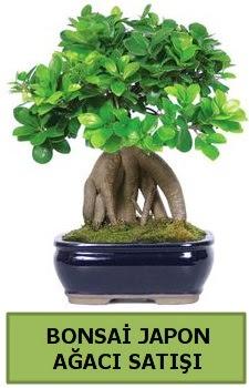 Bonsai japon ağacı satışı  Tekirdağ ucuz çiçek gönder