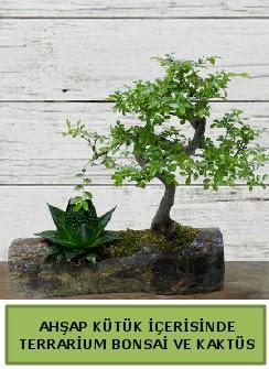 Ahşap kütük bonsai kaktüs teraryum  Tekirdağ online çiçek gönderme sipariş