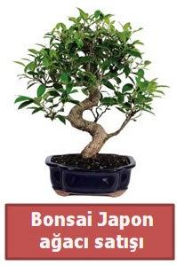 Japon ağacı bonsai satışı  Tekirdağ çiçekçiler