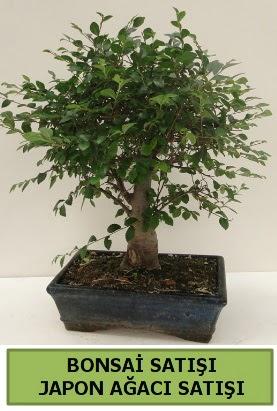 Minyatür bonsai japon ağacı satışı  Tekirdağ çiçek gönderme