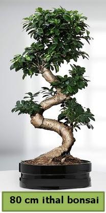 80 cm özel saksıda bonsai bitkisi  Tekirdağ çiçek , çiçekçi , çiçekçilik