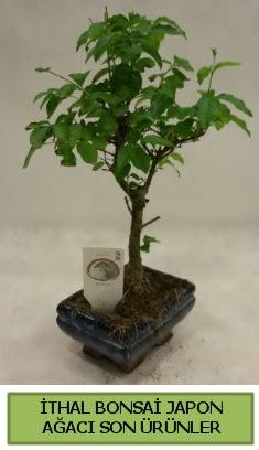İthal bonsai japon ağacı bitkisi  Tekirdağ çiçek servisi , çiçekçi adresleri