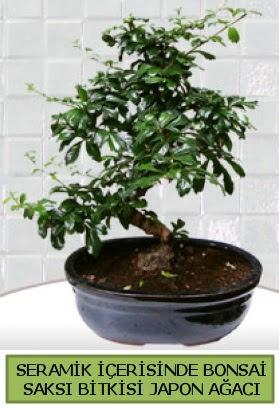 Seramik vazoda bonsai japon ağacı bitkisi  Tekirdağ çiçekçiler