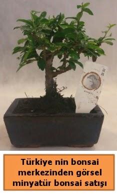Japon ağacı bonsai satışı ithal görsel  Tekirdağ çiçekçi telefonları