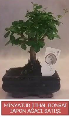 Küçük görsel bonsai japon ağacı bitkisi  Tekirdağ hediye çiçek yolla