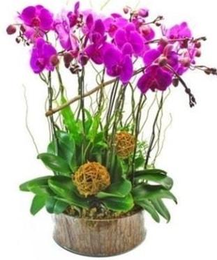 Ahşap kütükte lila mor orkide 8 li  Tekirdağ internetten çiçek siparişi