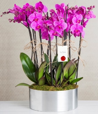 11 dallı mor orkide metal vazoda  Tekirdağ çiçek gönderme