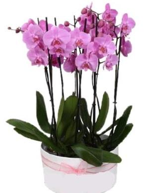 Beyaz seramik içerisinde 7 dallı mor orkide  Tekirdağ çiçek , çiçekçi , çiçekçilik