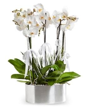 Beş dallı metal saksıda beyaz orkide  Tekirdağ çiçekçi telefonları