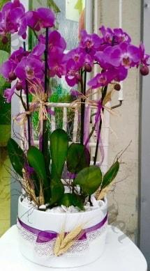 Seramik vazoda 4 dallı mor lila orkide  Tekirdağ cicekciler , cicek siparisi