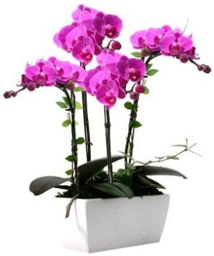 Seramik vazo içerisinde 4 dallı mor orkide  Tekirdağ ucuz çiçek gönder
